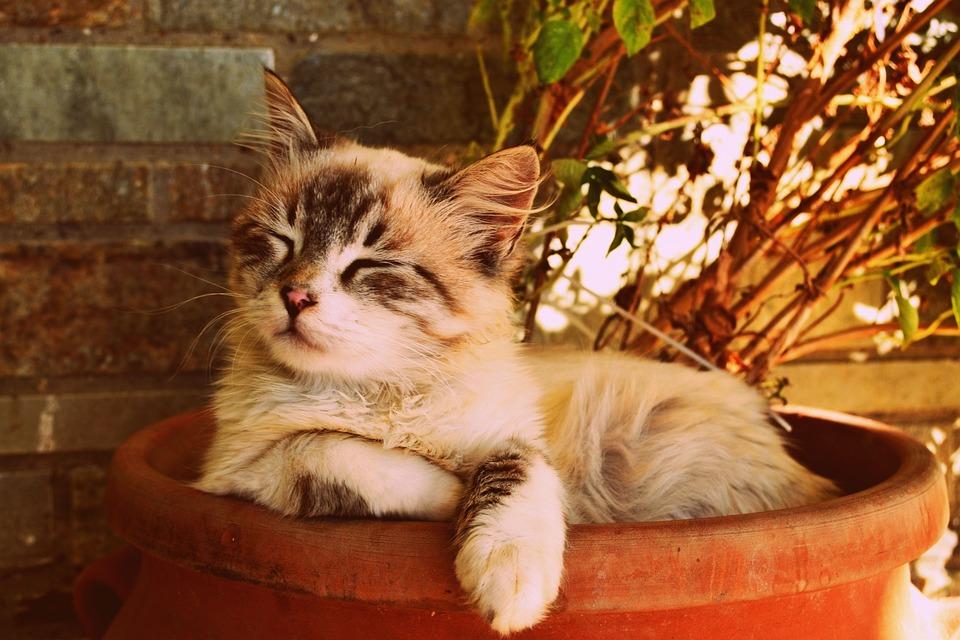 鍋に眠っている子猫, 美しい猫眠っています, ペットの肖像画, かわいい, 毛皮, 甘い, 愛らしい