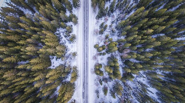 Free Photo Forest Road Above Aerial Cold Free Image