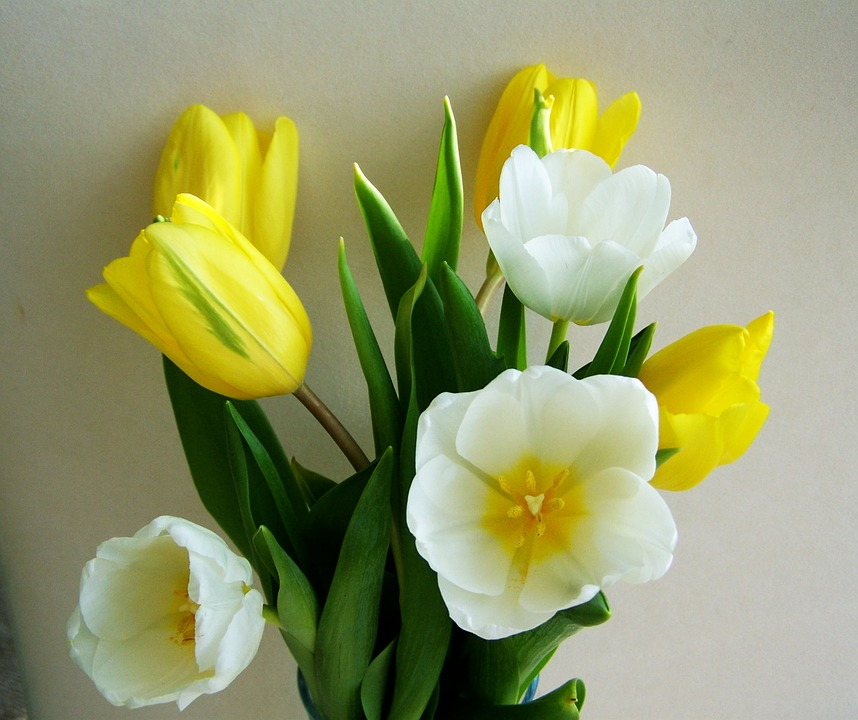 Tulip bunch of flowers yellow and free photo on pixabay tulip bunch of flowers yellow and white flower mightylinksfo