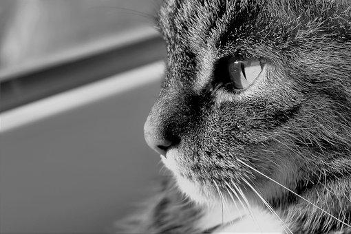 Black And White Pictures Of Cats