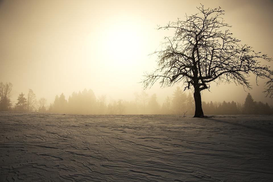 Зимнее Солнце Скачать Торрент - фото 6