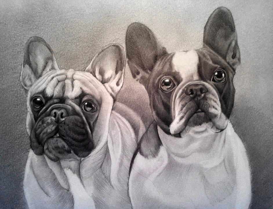 Bulldog Pes Domace Zvierata Obrazok Zdarma Na Pixabay