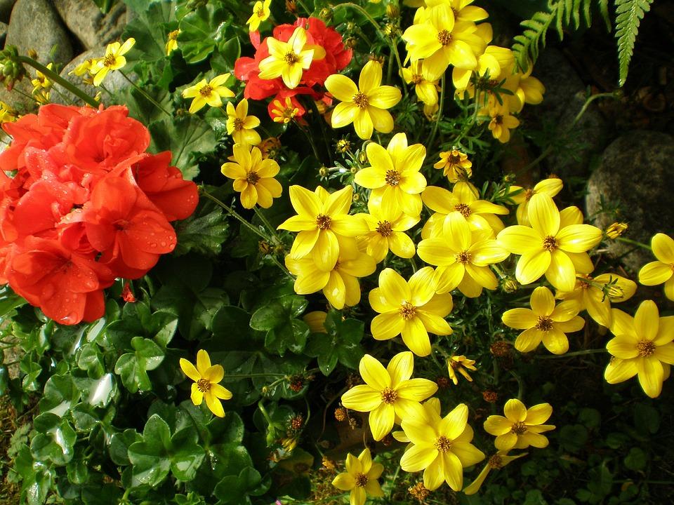 kostenloses foto: blumen, garten, pflanzen, natur - kostenloses, Garten Ideen