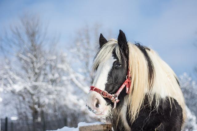 Horse Winter Snow 183 Free Photo On Pixabay