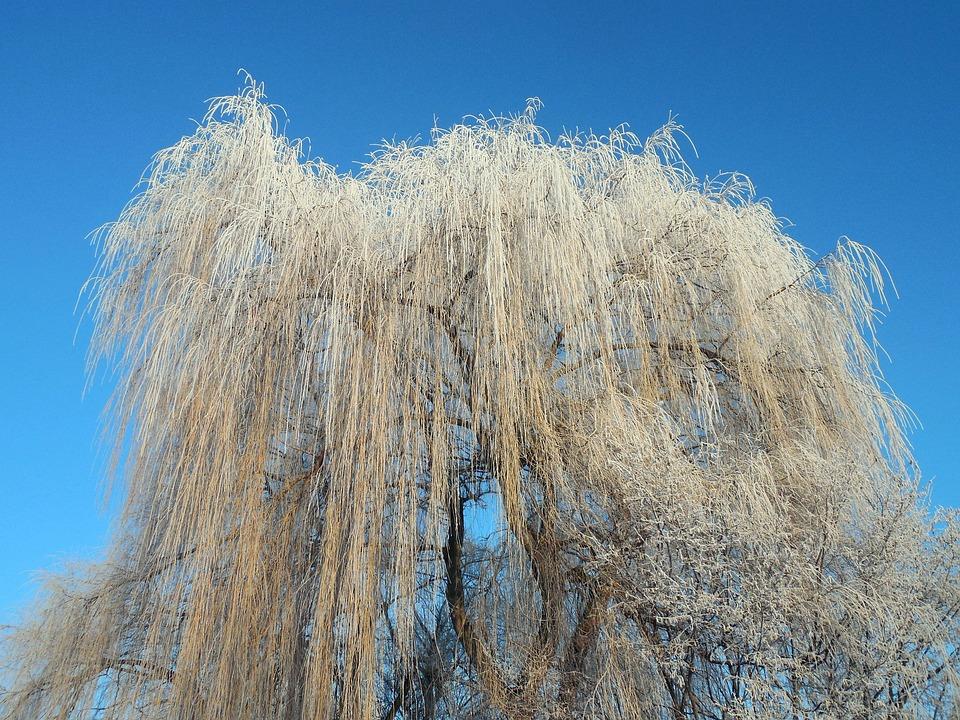 Bildergebnis für weide im winter
