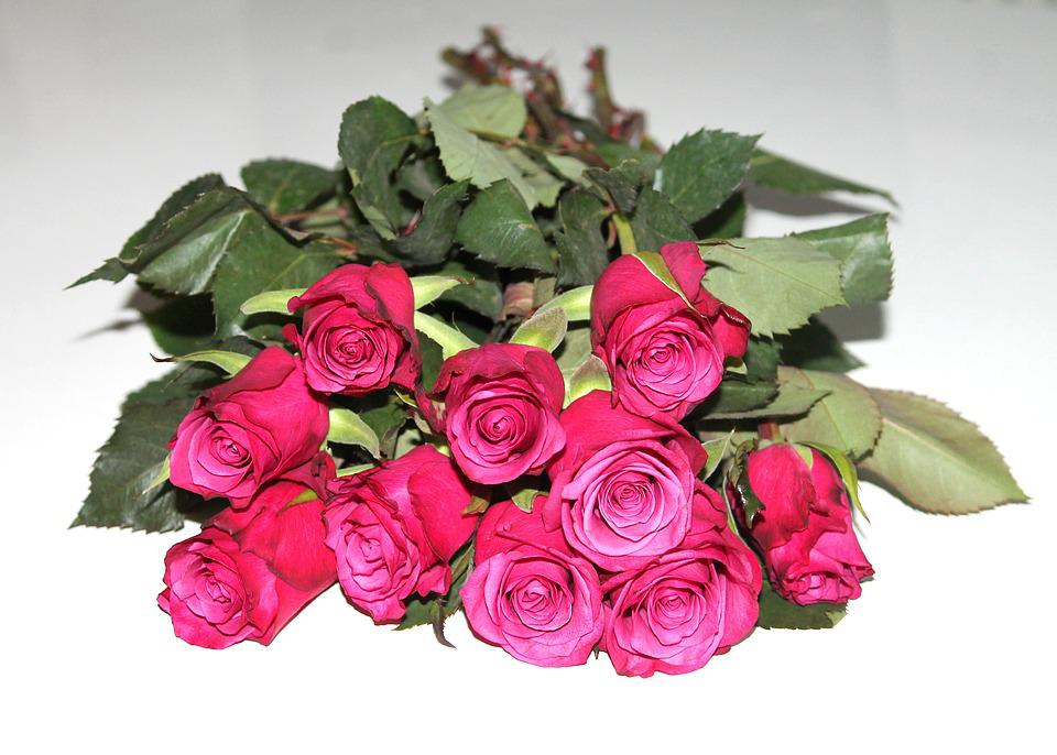 Red Garden Rose Bouquet free photo: many roses, roses, bouquet, flowers - free image on