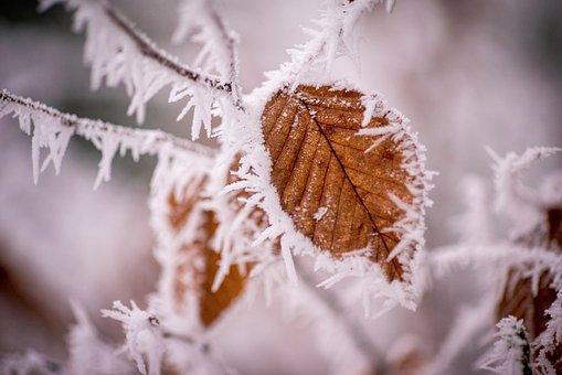 Winter, Frost, Kalt, Winterlich, Eis