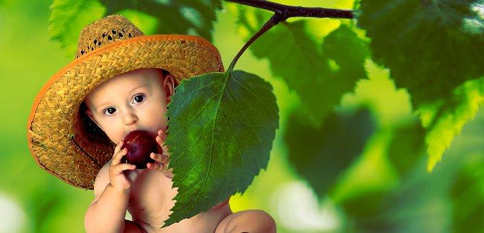 Summer, Vitamins, Fruit, Nutrition
