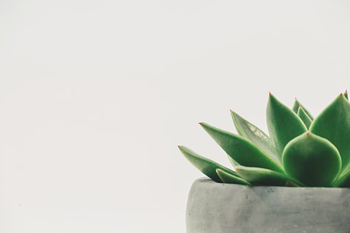 Plant, Succulent, Potted, White Space