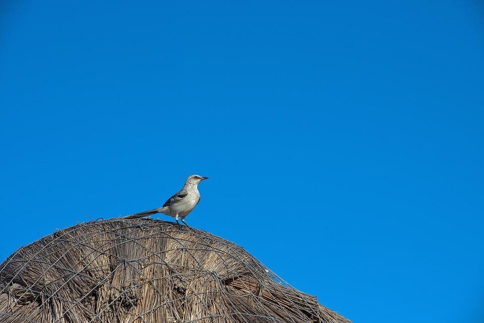 鸟, 野生动物, 自然, 动物, 羽毛, 多彩, 动物群, 天空, 蓝色