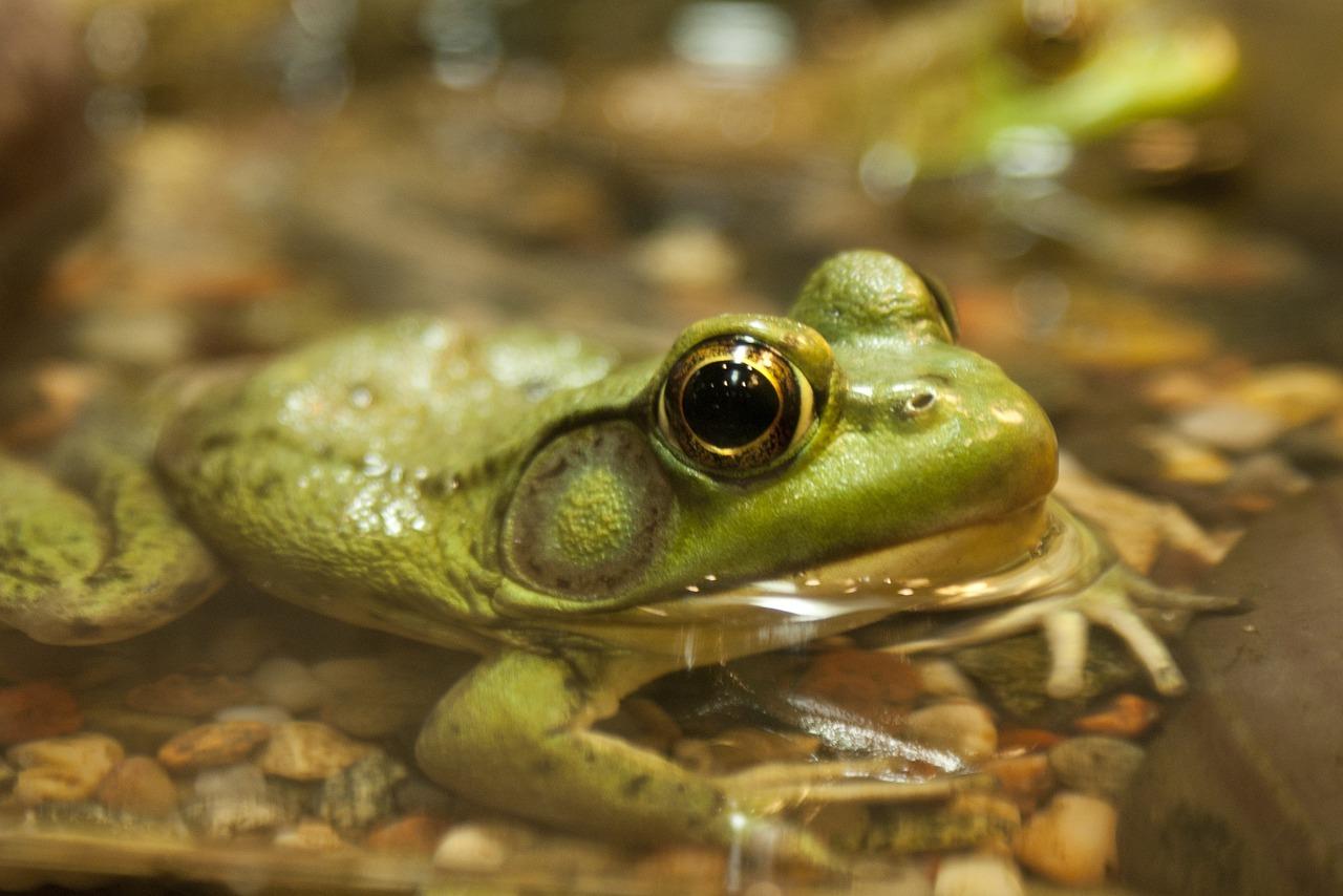 европе лягушонок красивая картинка такие покрытия комбинировать