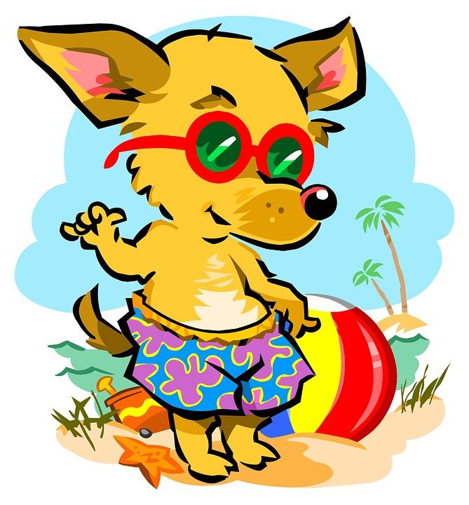Beach Chihuahua Dog · Free image on Pixabay