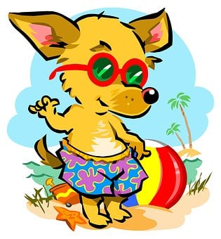Beach, Chihuahua, Dog, Pet, Animal