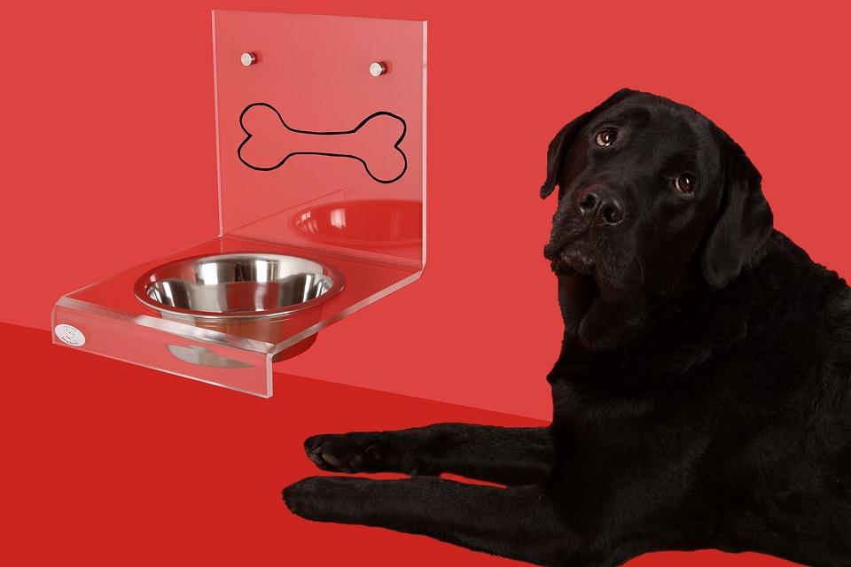 Hundenapf Hund Labrador · Kostenloses Foto auf Pixabay