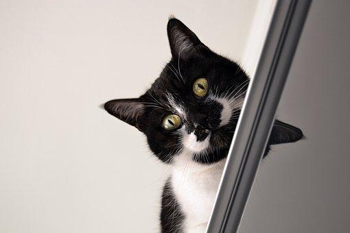 Mačky si vrnia, občas veľmi intenzívne mraučia alebo iba tichučko mňauknú a my si môžeme len domýšľať, čo nám chcú povedať.