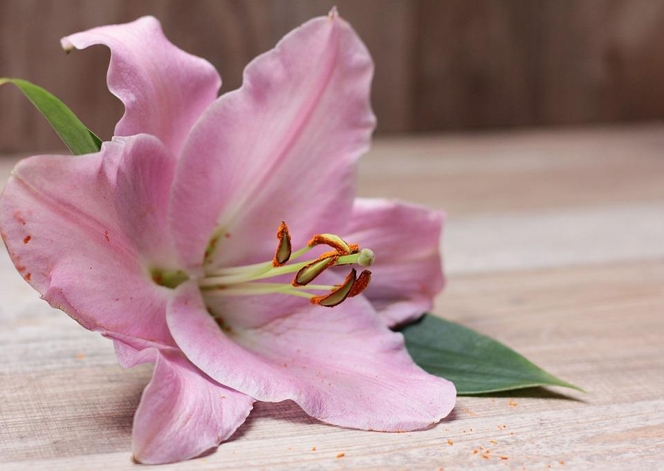 Lilie Blume Blüte · Kostenloses Foto auf Pixabay