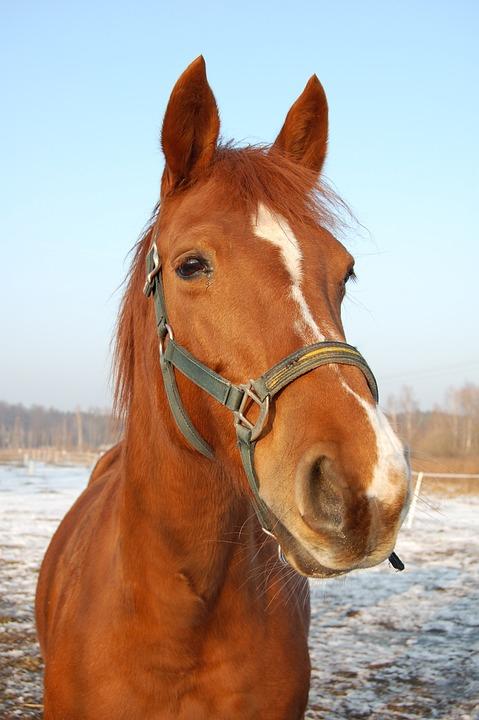 Photo gratuite le cheval museau t te de cheval image - Image tete de cheval ...