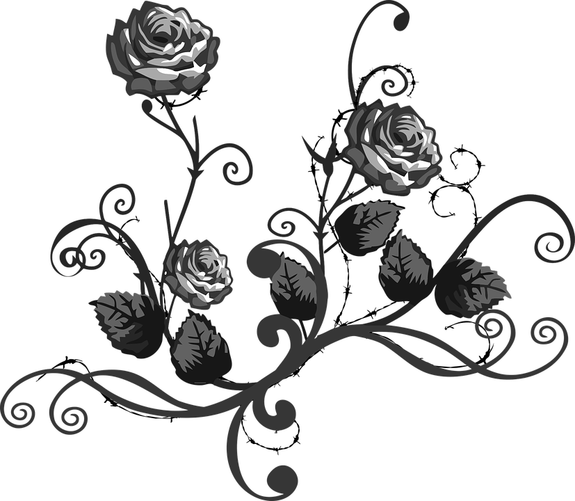 Rose Black White Free Vector Graphic On Pixabay