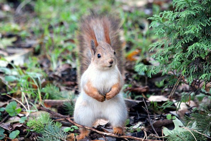 Image of squirrel in the wild.
