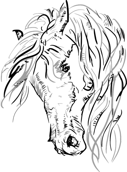 Vector Horse Horsehead Free Vector Graphic On Pixabay