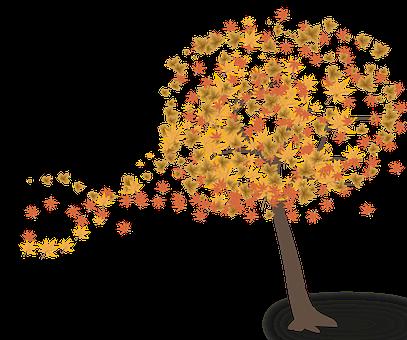 Herbstlaub Bilder Pixabay Kostenlose Bilder Herunterladen