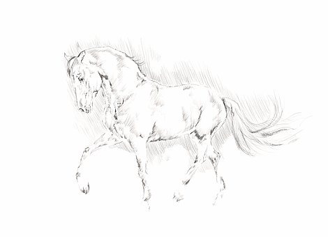 Illustration horse animal pencil black and