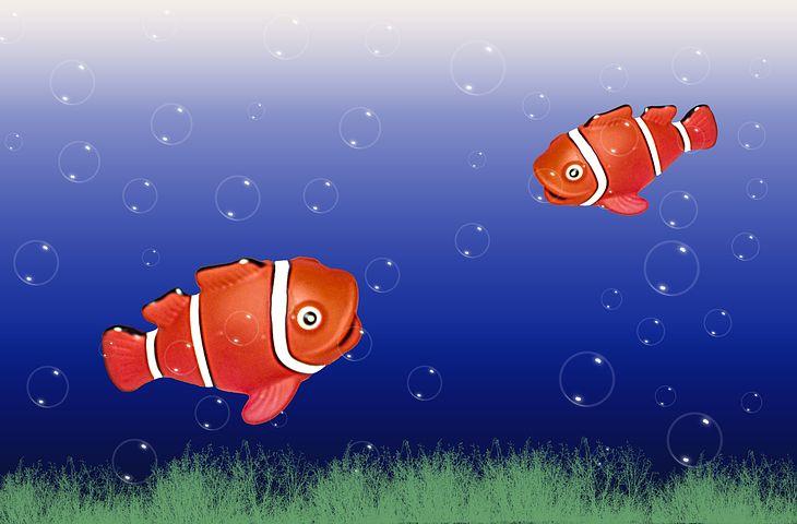 картинка рыбы плавают в воде некоторых лиц этом