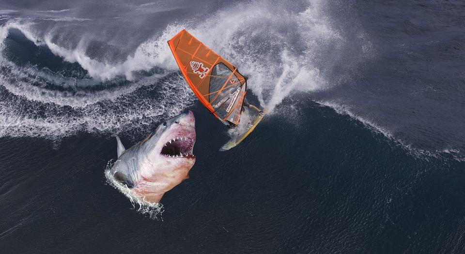 サメ、サーファー、波、ファンタジー、サーフィン、サーフ、ボード、海
