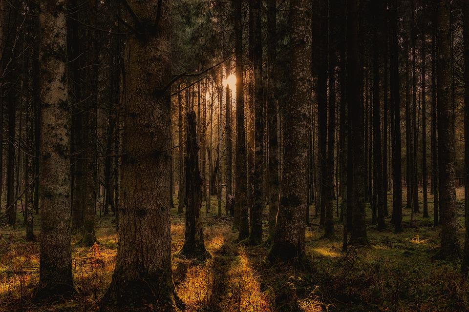 Леса, Деревья, Пейзаж, Природа, Панорама, Настроение