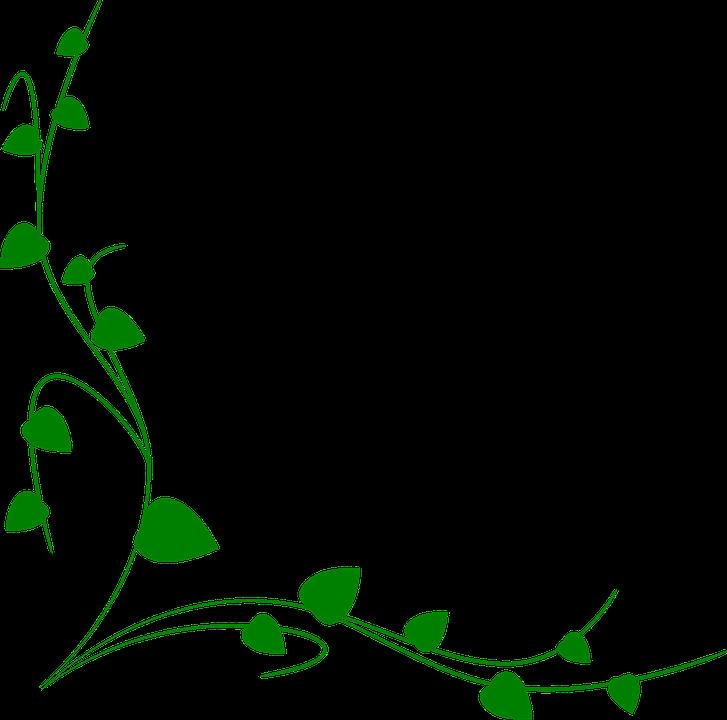 Ornament Foliage Decoration 183 Free Vector Graphic On Pixabay