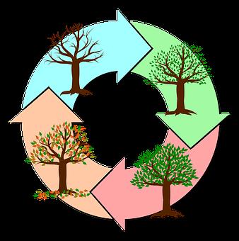 Seasons Of The Year, Year, Tree, Nature