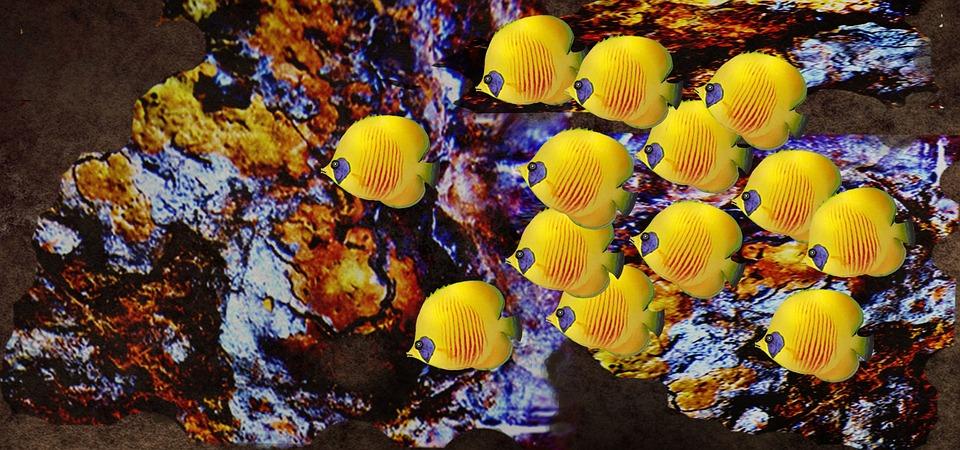 Nature, Fish, Water, Thailand, Underwater, Coral
