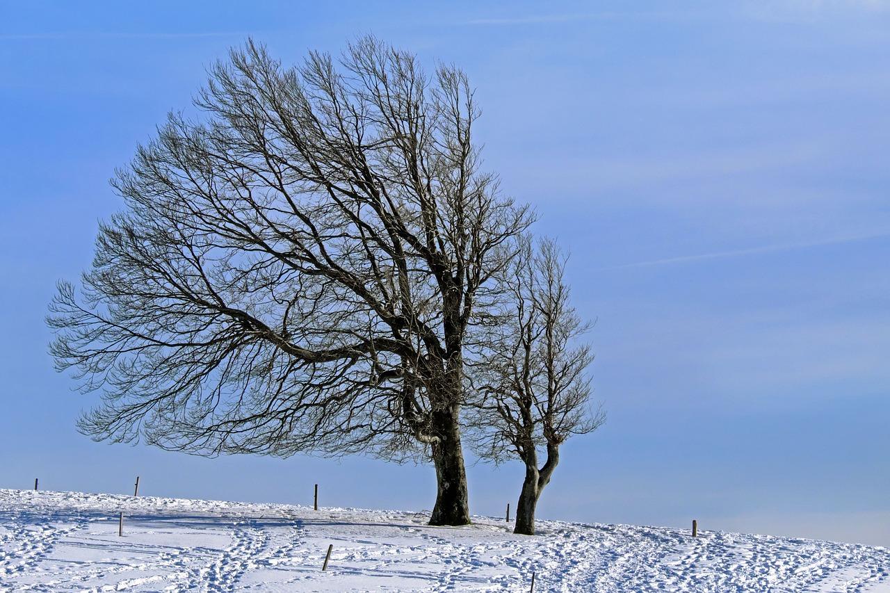Погода в Саратовской области на сегодня - воскресенье 07 марта 2021 года