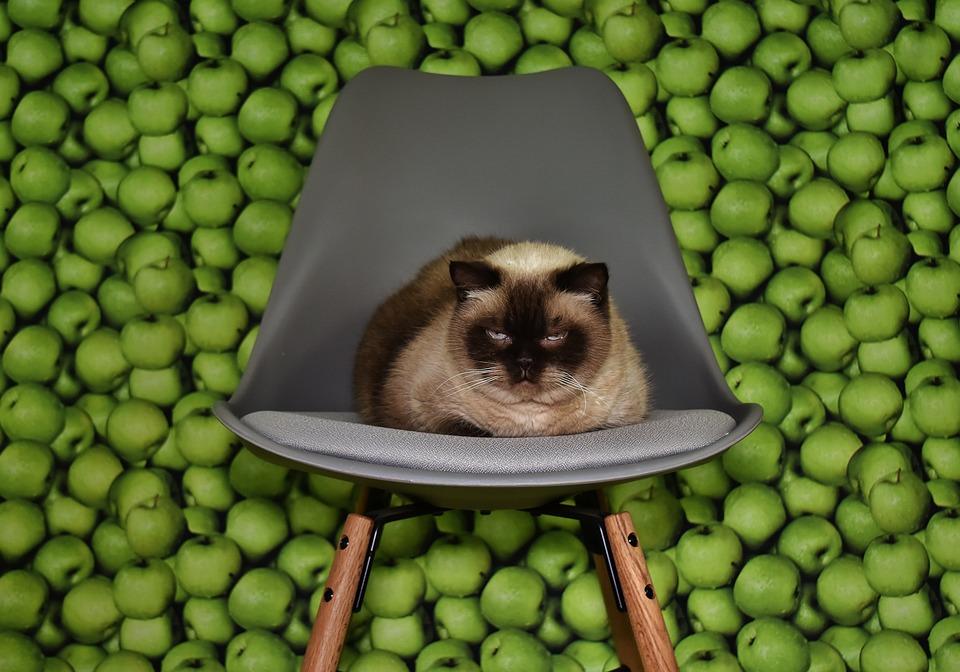 Katze Stuhl Liegen Kostenloses Foto Auf Pixabay