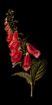 Bienal, Rama, Digital, Florales, Flor