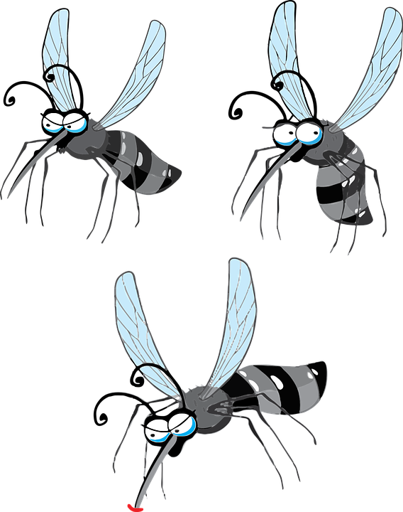 Vírus Zika, Dengue, Mosquito