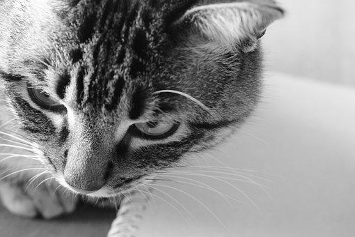 Pěkná kočička a péro