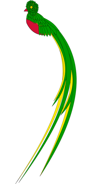 Animal Bird Guatemala · Free vector graphic on Pixabay