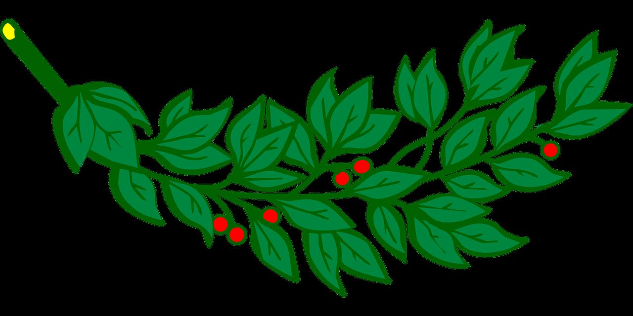 Листья лавра клипарт вектор — 3