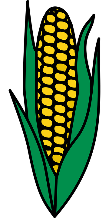Jagung Makanan Tanaman Gambar Vektor Gratis Di Pixabay