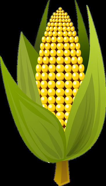 free vector graphic corn  food  fruit free image on Simply Orange Logo Tropicana Orange Juice