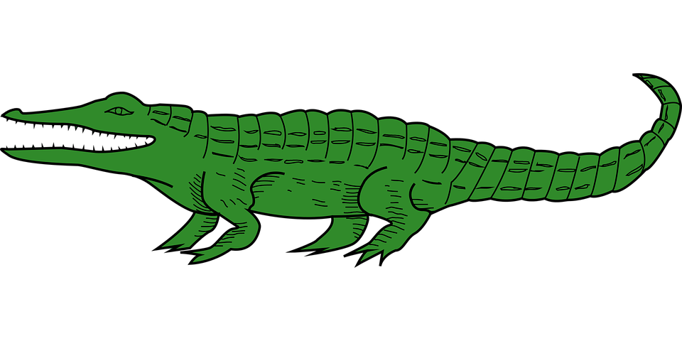 free vector graphic alligator animal crocodile free