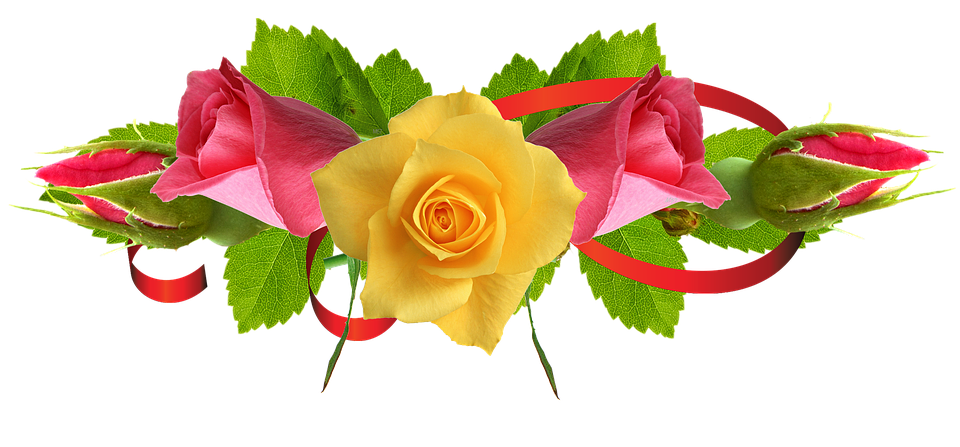 Real Flowers Png Png Images Rose Flower...