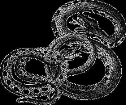 Over 200 Free Snake Vectors Pixabay Pixabay
