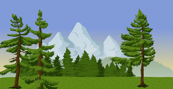 Immergrün, Wald, Landschaft, Berge