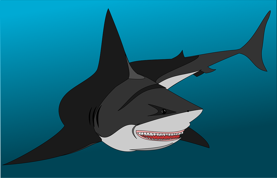 Shark Free pictures on Pixabay