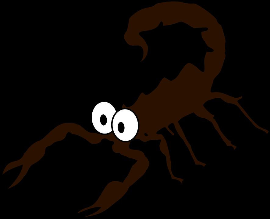 Skorpion Bilder Pixabay Kostenlose Bilder Herunterladen