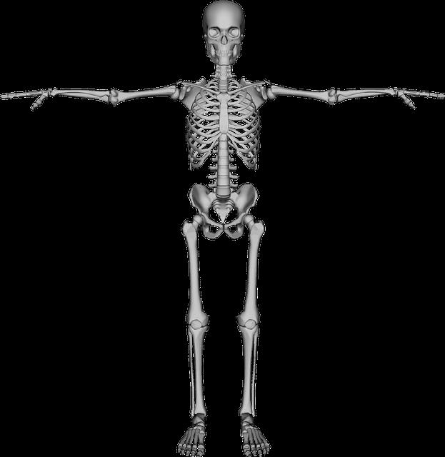 bones dead figure  u00b7 free vector graphic on pixabay