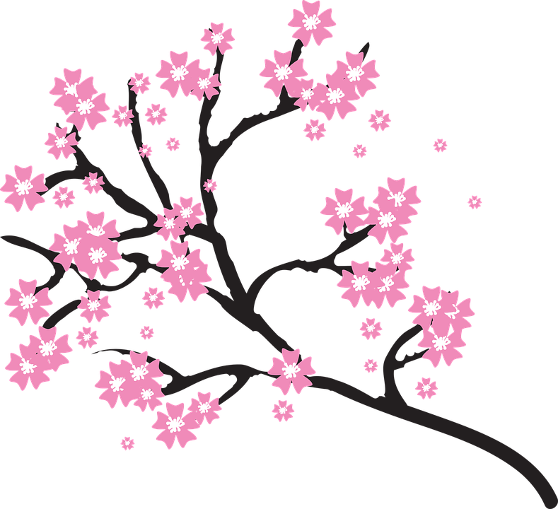 Blossoms, Branch, Cherry, Floral, Flowers, Nature, Tree
