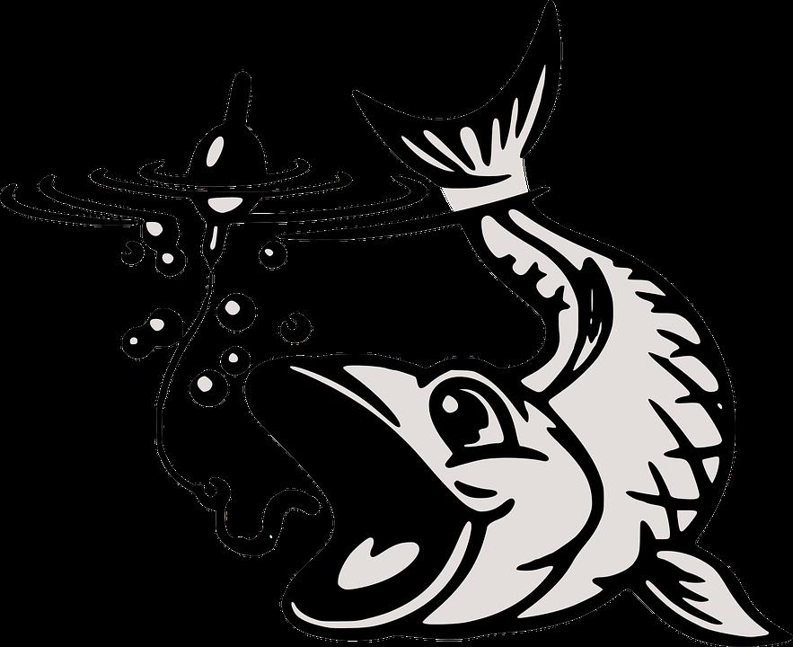 Umpan Ikan Penangkapan Gambar Vektor Gratis Di Pixabay